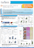 Physiogenex Diet-Induced NASH hamster model - Korean
